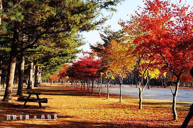 分享11/1~11/6秘苑,南怡島,晨靜樹木園,南山公園~楓紅,銀杏