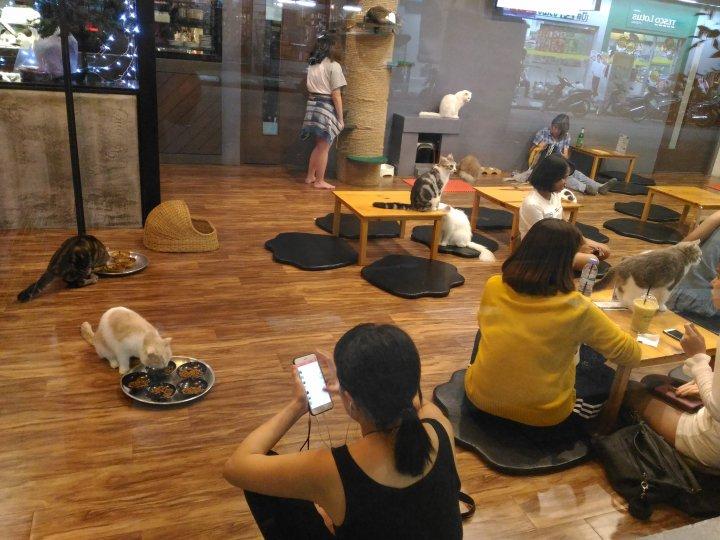 清萊的貓餐廳.......Thailand