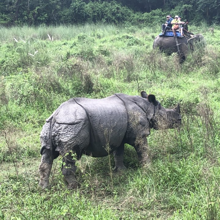 在奇旺國家公園騎大象,看犀牛。chitwan park Tour. Nepal guide contact here. Email:mountainguideraj3@g