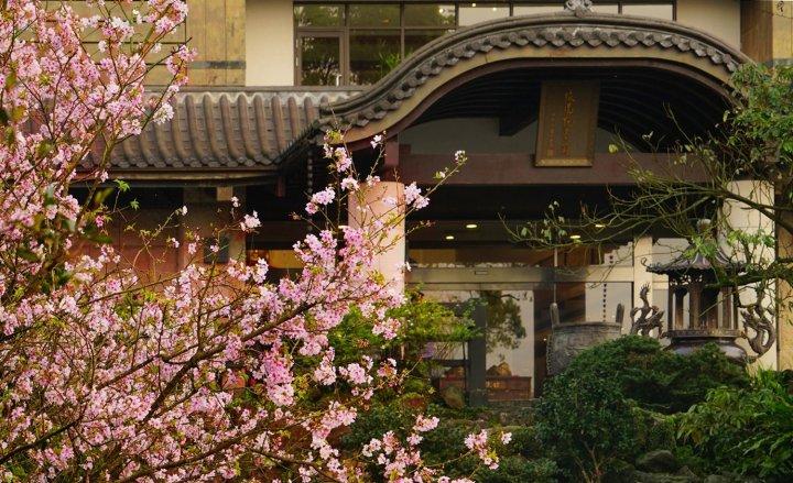 櫻花祕境緣道觀音廟 走春迎新好去處