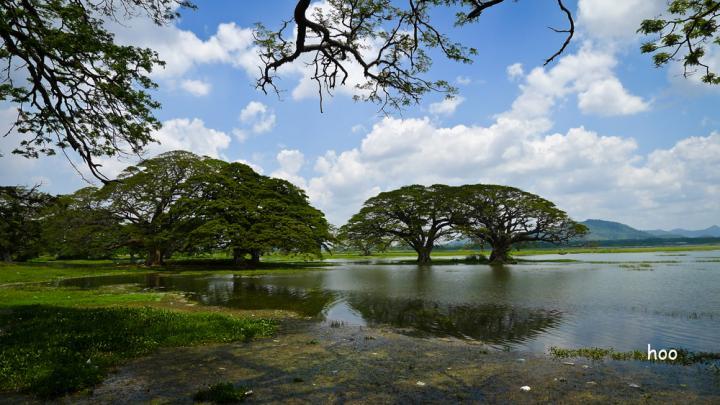 斯里兰卡 - 自然之旅