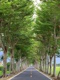 龍田綠色隧道