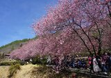 武陵-茶園步道